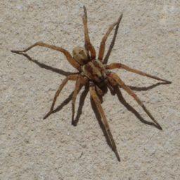Уничтожение пауков в Липецке